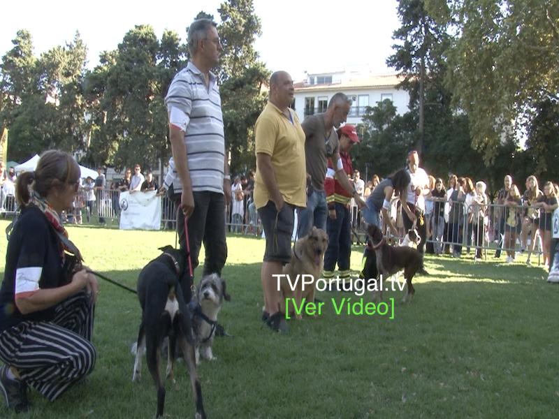 Festa do Animal 2019, Associação São Francisco de Assis Cascais, Carlos Carreiras, João Salgado, Cascais tv, Televisão, Portugal